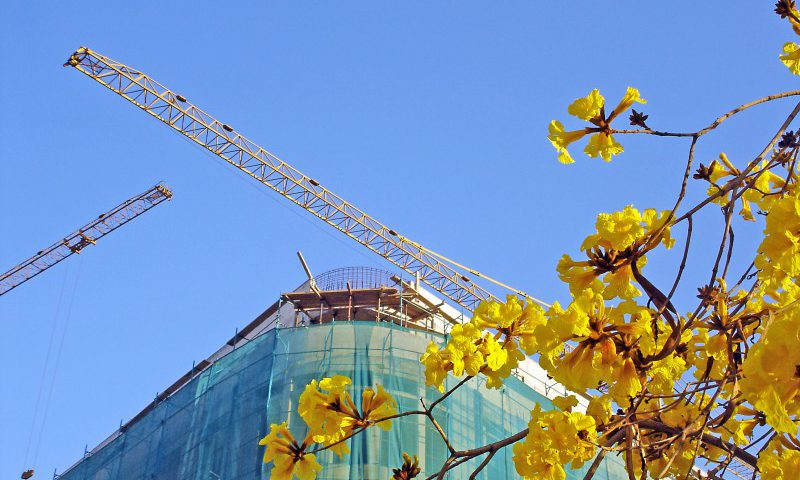 construction-in-bloom-1221318